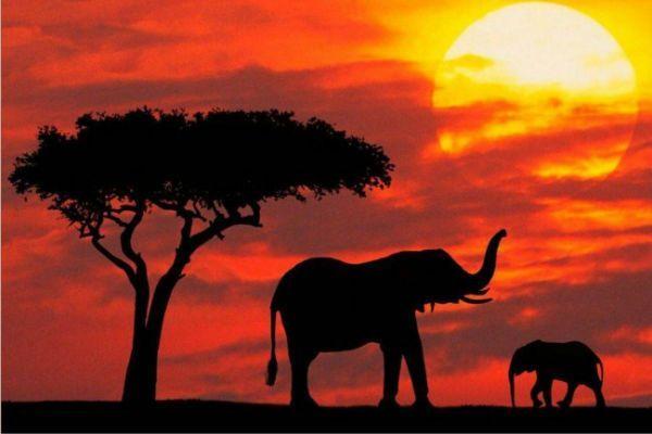 áfrica_oportunidad_tecnológica