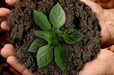 Acelerando la Economía Verde